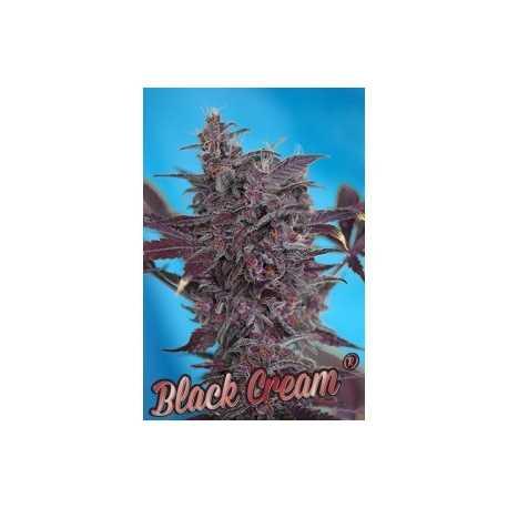 Black Cream Auto, 5 unidades