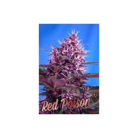 Red Poison Auto, 3 unidades
