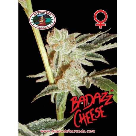 BADAZZ CHEESE (5)