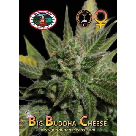 BIG BUDDHA CHEESE (10)