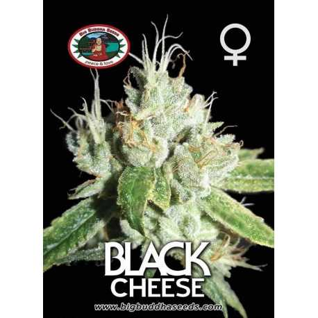BLACK CHEESE (10)