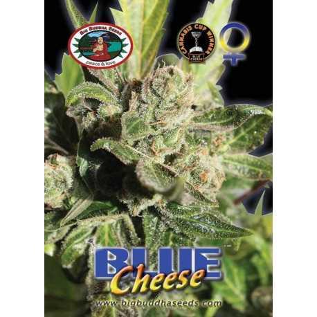 BLUE CHEESE (10)