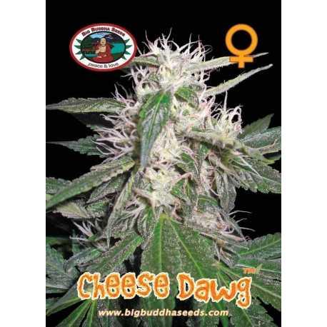 CHEESE DAWG (5)