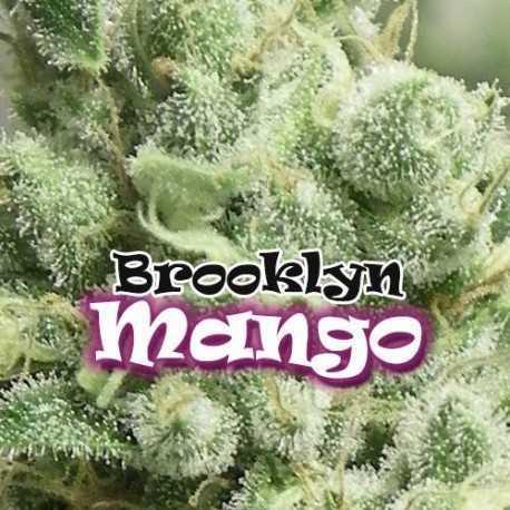 BROOKLYN MANGO (2)