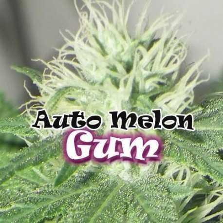 AUTO MELON GUM (25)