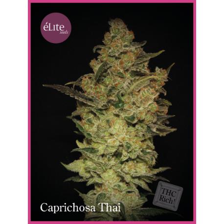 CAPRICHOSA THAI (7)