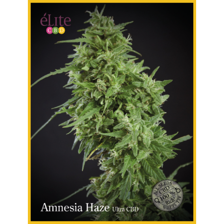 AMNESIA HAZE-ULTRA (3) AUTO CBD