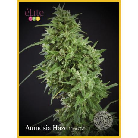 AMNESIA HAZE-ULTRA (7) AUTO CBD