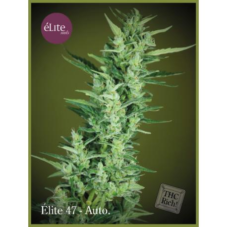 ELITE 47 (3) AUTO