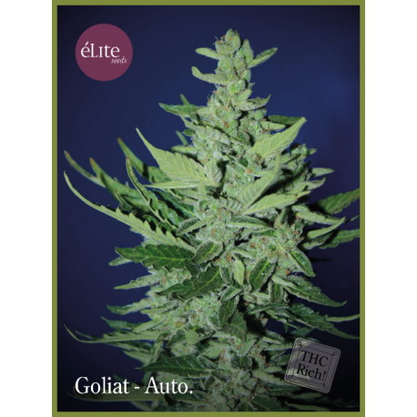 GOLIAT (7) AUTO