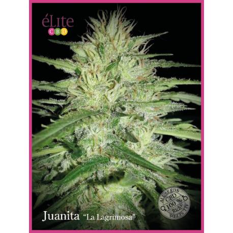 """JUANITA LA LAGRIMOSA"""" (7) CBD"""""""