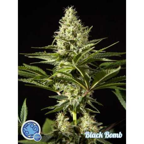 BLACK BOMB (5)