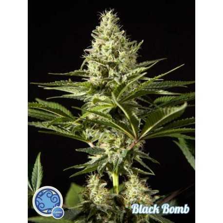 BLACK BOMB (25)