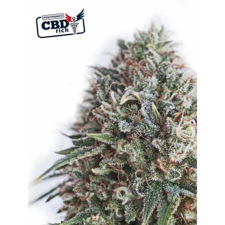 CBD+CRITICAL N47 (1)