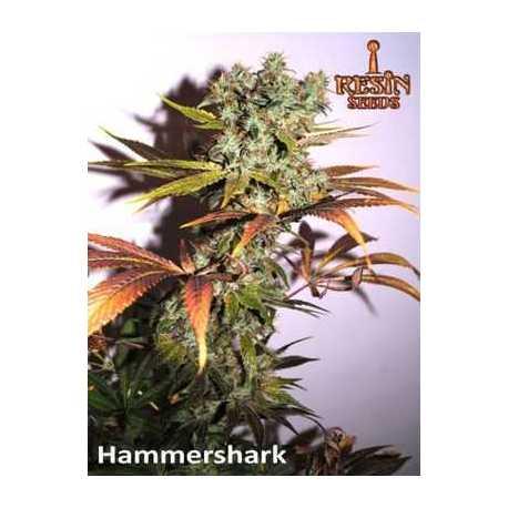 HAMMERSHARK (3)