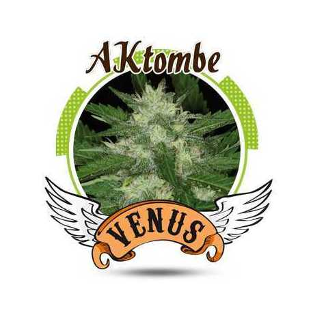 AKTOMBE (100)