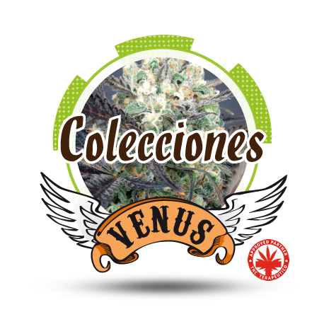 COLECCION 1 (6)