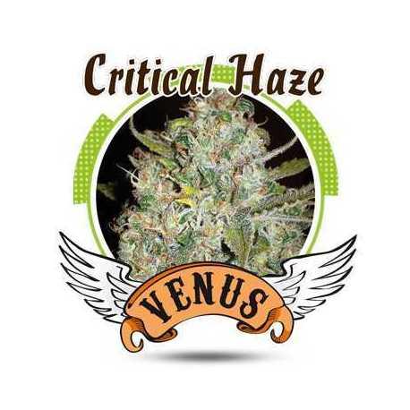 CRITICAL HAZE (25)
