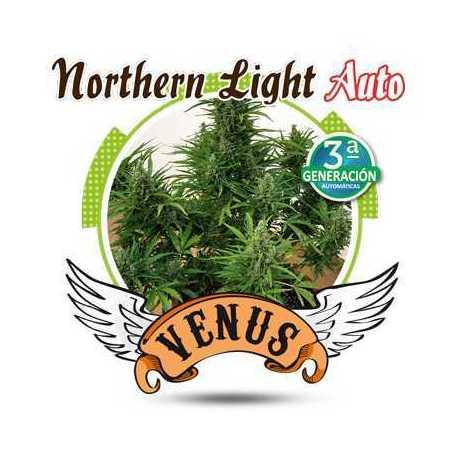 NORTHERN LIGHT AUTO (3)