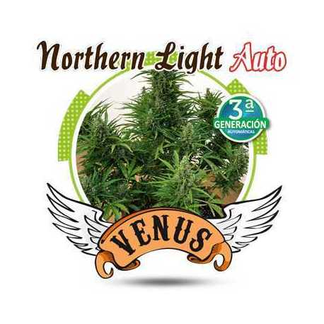 NORTHERN LIGHT AUTO (10)